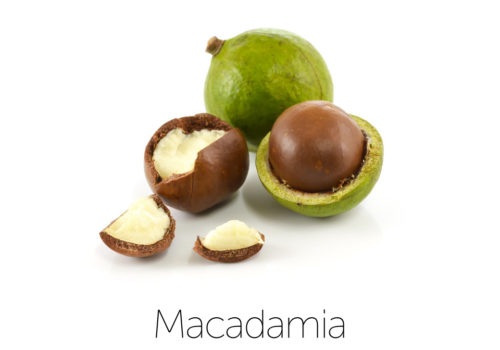 ingredientMacadamia